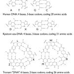 DNA base bonding to demonstrate metacode